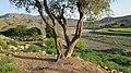 Navidhand village 2013 pic 31 - panoramio (1).jpg