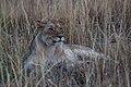 Nkomazi Game Reserve, South Africa (22639179122).jpg
