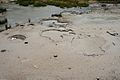 Norris Geyser Basin 12.jpg