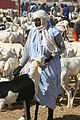Nouakchott goat market1.jpg