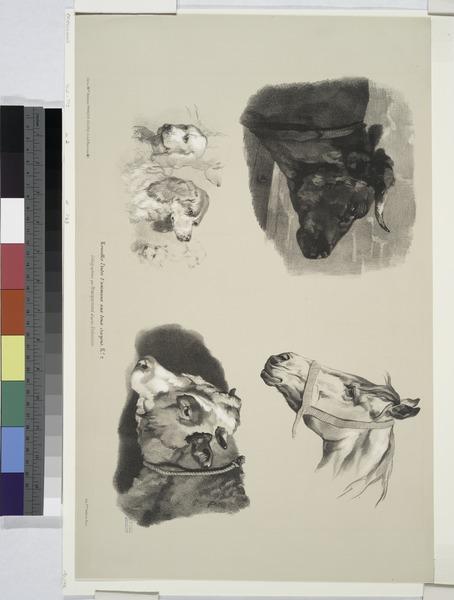 File:Nouvelles études d'animaux aux deux crayons, no. 2- (Têtes de taureau, de cheval, de chiens, de boeuf) (NYPL b16513363-1150575).tiff