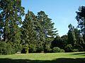 Nuneham Courteney Arboretum - geograph.org.uk - 1455543.jpg