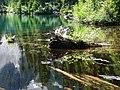 Nurse log with plants in lake. Mid August, 2014. (c0d32ff5296b4a26b4f090e7a0717198).JPG