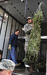 O Christmas Tree 121130-F-FM358-023.jpg