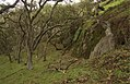 Oak forest understory habitat of Illacme plenipes - ZooKeys-241-077-g011-top.jpeg