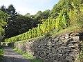 Obernhofer Goetheberg Weinbau Lahnwein.jpg