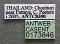 Oecophylla smaragdina casent0173646 label 1.jpg