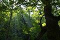 Oirase Mountain stream - panoramio.jpg