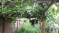 Old Vineyard Visit - panoramio (12).jpg