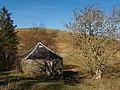Old barn and ash tree, Sundhopehead. - geograph.org.uk - 328047.jpg