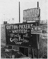 "On Highway 84, outskirts of Eloy, Pinal County, Arizona. Highway signs reading ""cotton pickers wante . . . - NARA - 522492.tif"