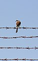 On barbed wires (15971037921).jpg