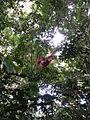 OrangutankaZmladicem20130425 1600.jpg