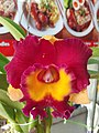 Orchid from Thailand 13.jpg
