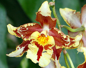 Plant reproduction - An orchid flower