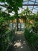 Osnabrück - Botanischer Garten - Tropenhaus - Innenansicht -BT- 04.jpg