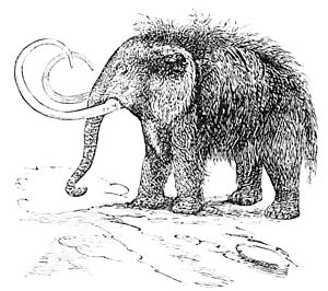 PSM V16 D813 The mammoth or hairy elephant.jpg