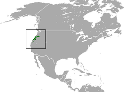 Pacific Shrew area.png