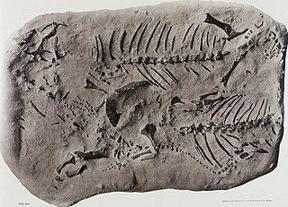 <i>Koiloskiosaurus</i>
