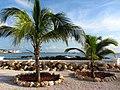 Palm Tree Ocean View (6543983935).jpg