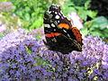 Papillon sur une fleur.jpg