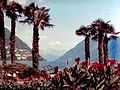 Paradiso Seeufer mit Barke 1970.jpg