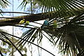 Parakeets, Wild Adventures 2016 c.JPG