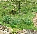 Parcours botanique Le Gua, Alpe d'Huez abc4.jpg