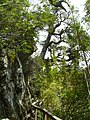 Parque Nacional Los Alerces - Chubut - Argentina - panoramio (1).jpg