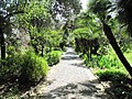 Path in the Hanbury gardens.jpg