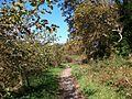 Path through the woodlands below Castell Aberlleiniog - geograph.org.uk - 1541098.jpg