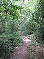 Path through the woods at the edge of Caversham Park - geograph.org.uk - 882277.jpg