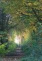Path to Newbiggin Hall - geograph.org.uk - 1050096.jpg