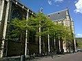 Pays-Bas Rotterdam Sint-Laurenskerk Cote Droit - panoramio.jpg