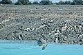 Pelikan in Khoor-Azini-Sirik.jpg