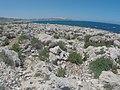 Pembroke, Malta - panoramio (41).jpg