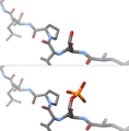 Phosporylation of a serine residue, before and after shot.png