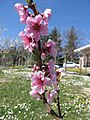 Piante fiorite - panoramio - Emanuela Meme Giudic… (2).jpg