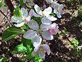PikiWiki Israel 43187 Plants of Israel.jpg