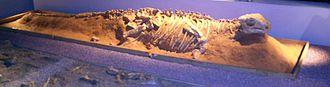 Campanian -  Pinacosaurus