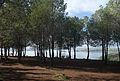 Pines and Lake 02.jpg