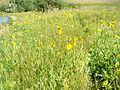 Plant life at Castlewood Lake..JPG