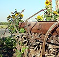 Planter and SunFlowers (7288680884).jpg