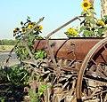 Planter and SunFlowers (7288680884).jpg