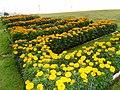 Plants of Sharjah - panoramio.jpg
