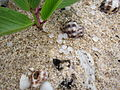 Plastic pellets in Ngong Chong Beach.JPG