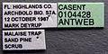Platythyrea punctata casent0104428 label 1.jpg