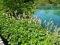 Plitvice lakes (40).JPG