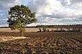 Ploughed field and a tree - geograph.org.uk - 1573976.jpg