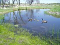 Pond-2069 Lake S.hore Rd - panoramio.jpg